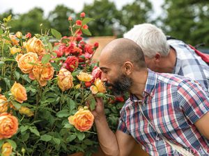 Members of the public enjoying the Rainbow of Roses stand at Hampton Court Garden Festival 2021. Roses featured here are Lady of Shalott and Summer Song