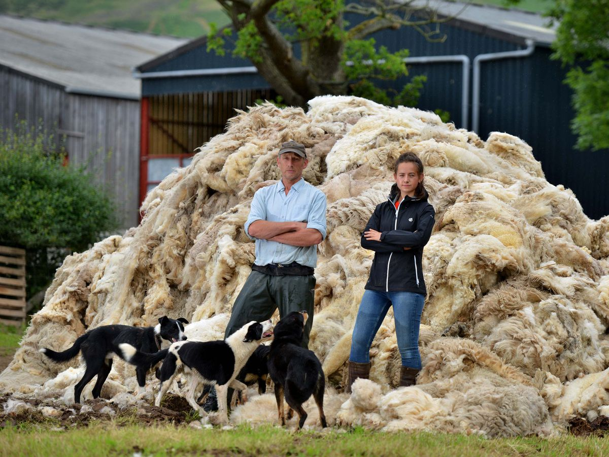 Farmer Dave Jones and daughter Amelia Jones at Asterton, Lydbury North, with piles of fleeces that are going for compost