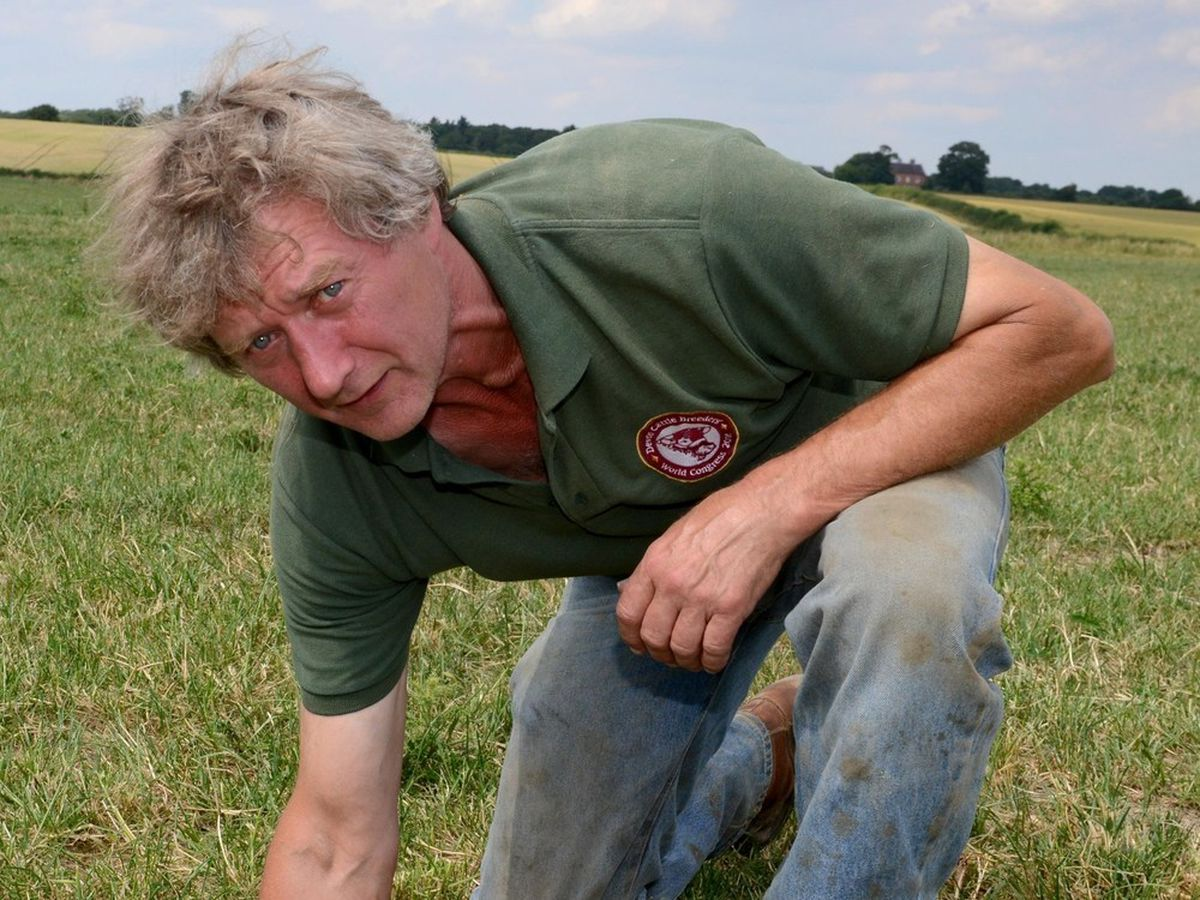 Andrew Bebb found sheep trussed up in the corner of a field