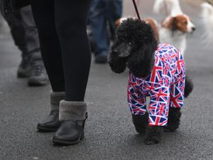 A dog wearing a onesie covered in Union flags arrive at the Birmingham National Exhibition Centre (NEC) for the first day of the Crufts Dog Show