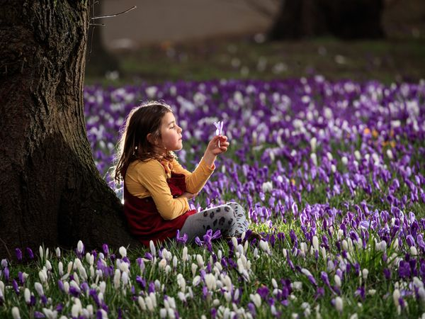 Sophia Gibson holds a crocus on the first day of meteorological spring at Kirkstall Abbey Park in Leeds, West Yorkshire