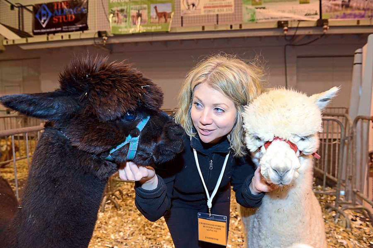 Fluffy visitors entertain crowds in Telford