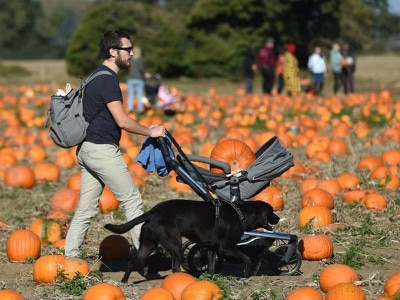 In Pictures: People get pumpkin picking ahead of Halloween festivities