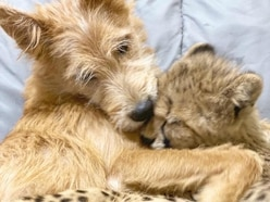 The story behind this cheetah cub-puppy friendship going viral on social media