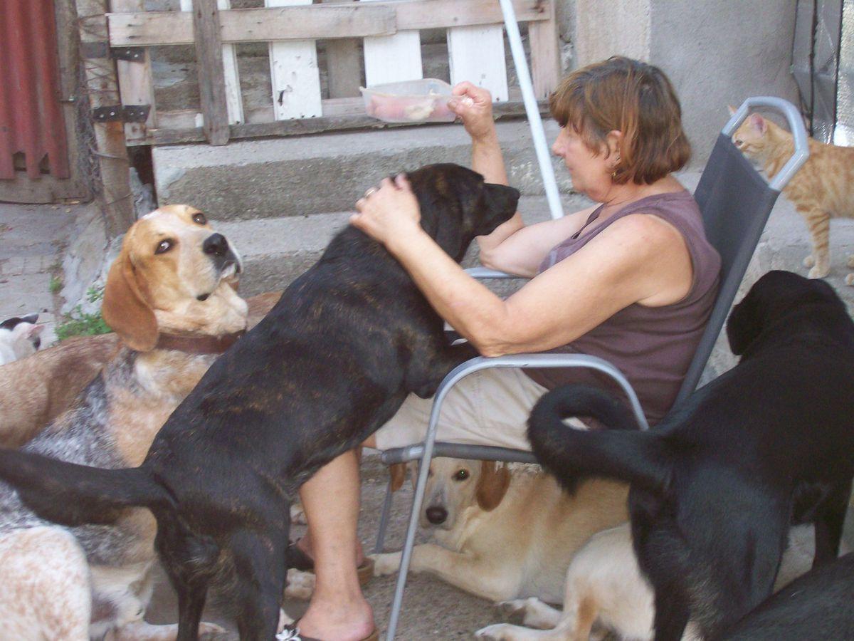 Pat feeding the dogs
