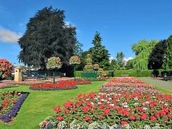 17,000 new trees could be planted in Oswestry over next three years