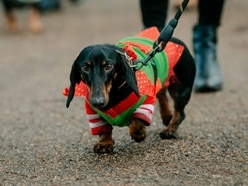 More than 100 turn out for Shrewsbury sausage dog walk