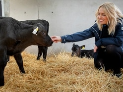 Welsh beef status celebrated on farm