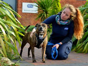 Animal care assistant Rosie Stokes-Chaplin, from Selly Oak, with a Staffordshire Bull Terrier called Buddy