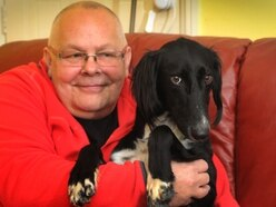Miles better: Dog hit by police car near Oswestry is on the mend