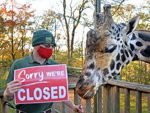 Keeper Adam Davey breaking the news to Kubwa the giraffe at Dudley Zoo