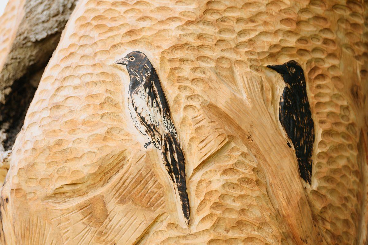 Joffrey carved birds into the tree stump