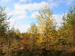 Woodland planting 'must more than double' to tackle climate and nature crises