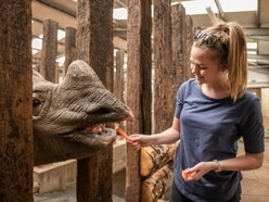 Help protect endangered rhinos at West Midland Safari Park
