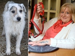 Joy as Oswestry woman's missing dog is found – six years on