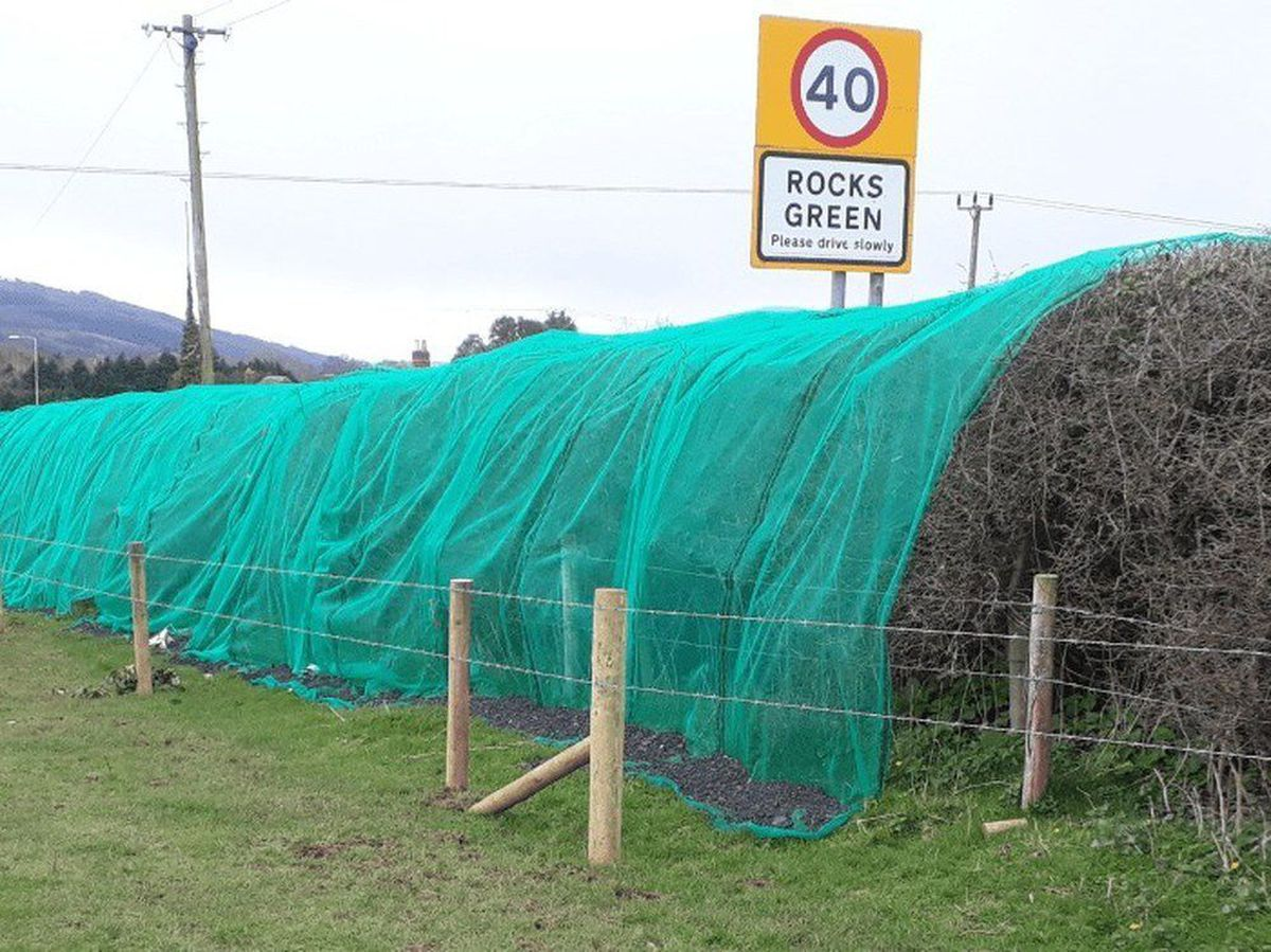 Netting was placed over a hedgerow at Rocks Green, near Ludlow