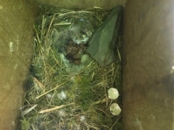 Vandals with rocks destroy bird nests and kill chicks