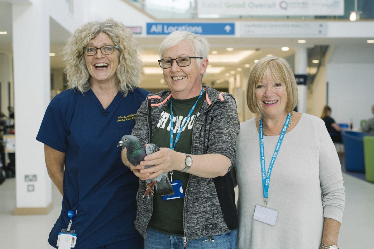 With the pigeon Nicki Williams, Acute Pain Sister; Freja Evans Swogger, Patient Panel member; and Dee Hamilton, hospital helpdesk volunteer.