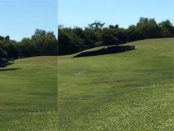 Watch this enormous alligator surprise golfers at a course in Florida
