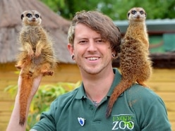 Telford zoo accused of building 'illegal' structures