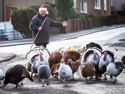 Turkey off the Christmas menu for conservationist