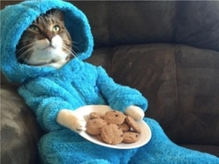 US embassy apologises for mistakenly emailing Cookie Monster cat picture