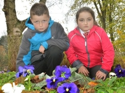 Telford pupils' sadness as flower thieves strike again