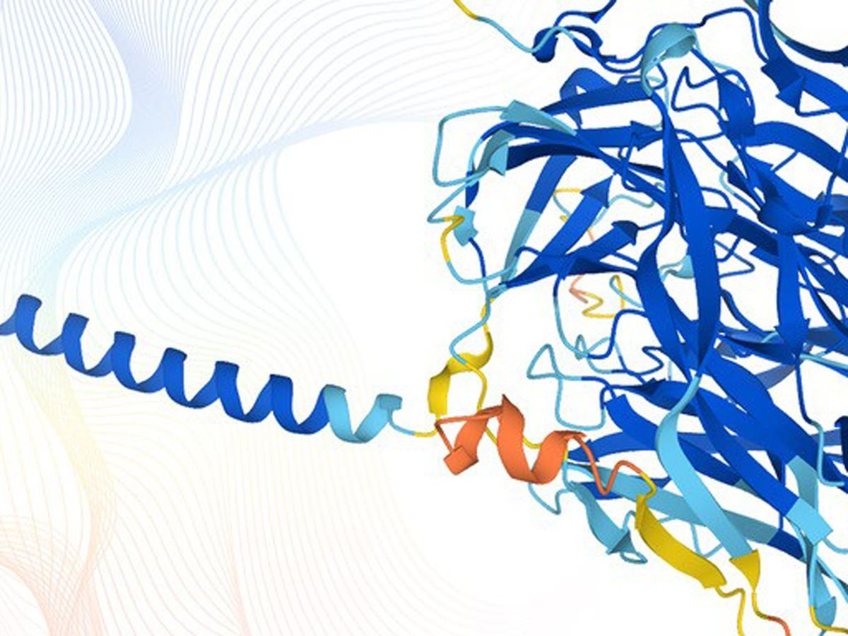 Protein structures representing the data obtained using AlphaFold