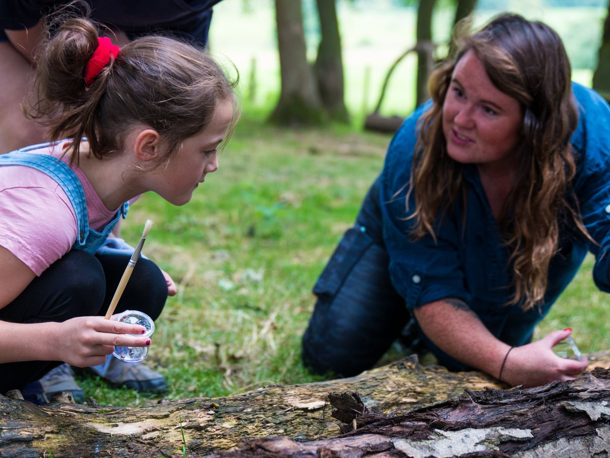 Getting involved in bug hunting at Fordhall Farm