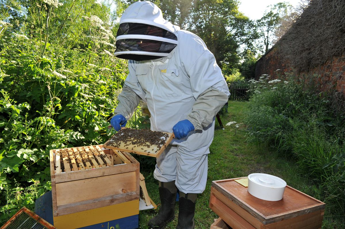 Alan says bees should always be treated with respect