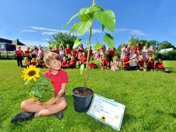 Green-fingered Frank wins school sunflower competition