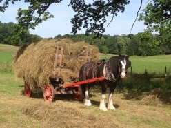 'His gentle and loving nature captured the hearts of thousands': Acton Scott farm announces death of beloved Shire horse Charlie