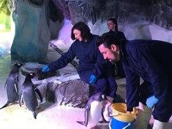 Strictly star Shirley Ballas visits National Sea Life Centre Birmingham