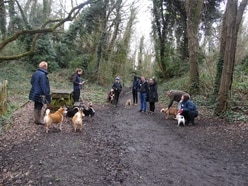 Telford pet memorial walk lets owners remember furry friends