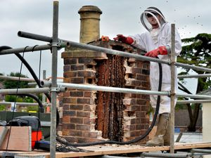 Rob Davies of PestForce with the bee colony in the Bridgnorth chimney