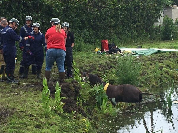 Horse rescued from pond near Whitchurch