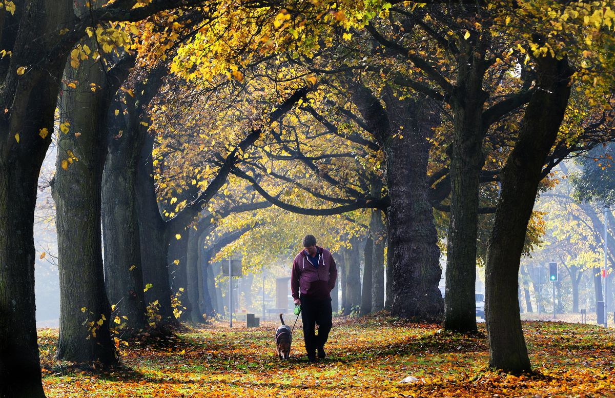 Autumn comes to Pelsall Common. Dog walker Chris Winslow strolls through the leaves with Alfie.