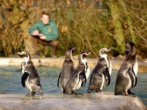 P-p-promenade like a penguin