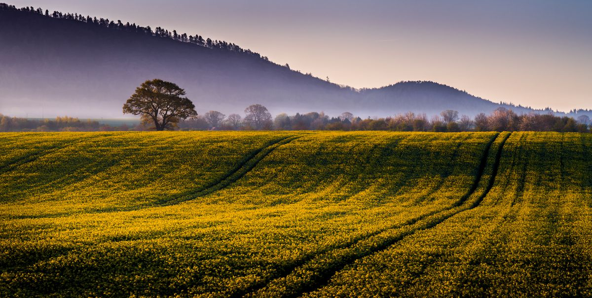 Early Morning Light by Andy Udell shows a rural local scene