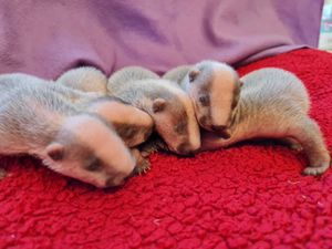 Valentine, second from right, with his four adoptive siblings: Rose, Cupid, Romeo and Casanova