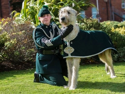 Royal Irish mascot Brian Boru X 'always the star of the show'
