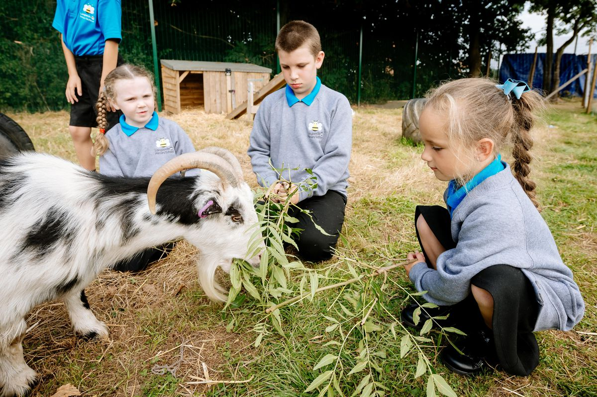 Pupils at Longlands Community Primary School in Market Drayton have welcomed two new pygmy goats – Leo and Vince