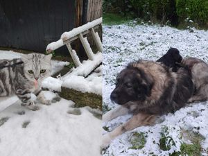 Dogs and cats explored the snowy landscape with their owners after snow fell across the UK