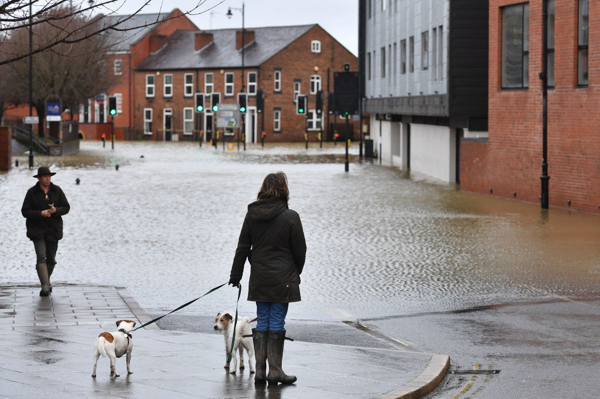 A dog walker surveys the flooding in Chester Street, Shrewsbury