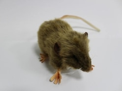 The brilliant reason The National Archives is selling a cuddly toy rat