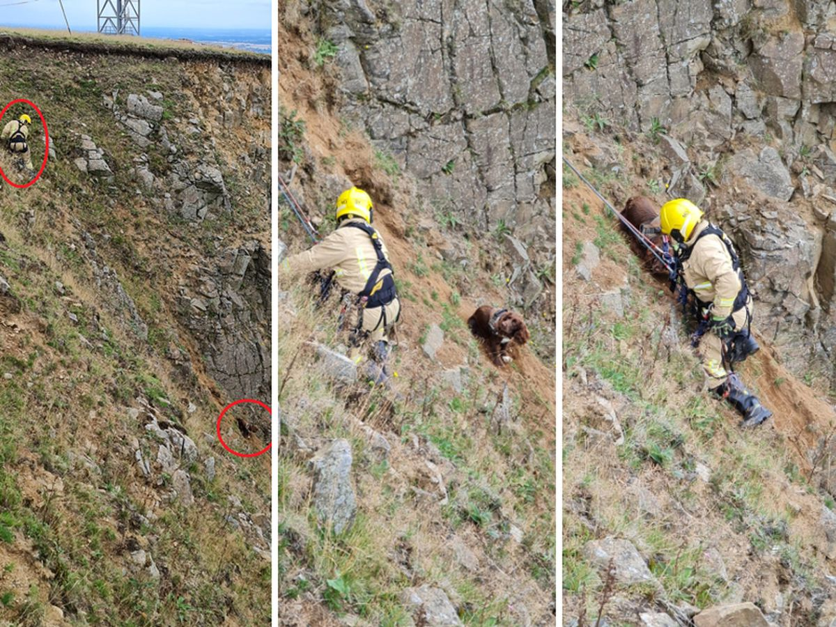 A firefighter abseiled down to rescue the dog. Photo: Shropshire Fire and Rescue Service