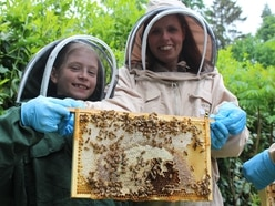 Bee Friendly: Why Shropshire border castle is buzzing