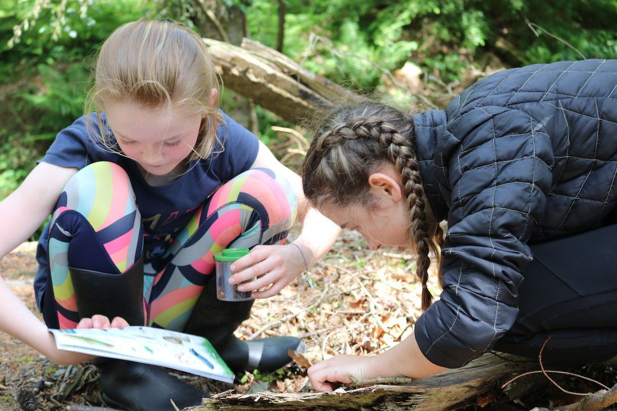 Field Studies Council is helping to brighten up home-schooling for primary pupils and their parents with a new and exciting programme of live nature lessons