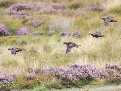 Hundreds of thousands of animals being killed on moors, campaigner claims