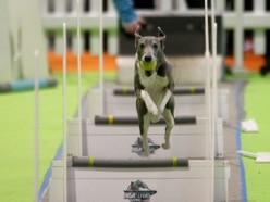 Jumping dogs and dapper parrots among stars at Birmingham's National Pet Show - in pictures